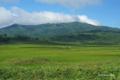 [北海道][雨竜沼湿原]湿原を往く