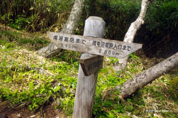 雨竜沼湿原展望台分岐