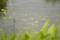 [北海道][雨竜沼湿原][花]