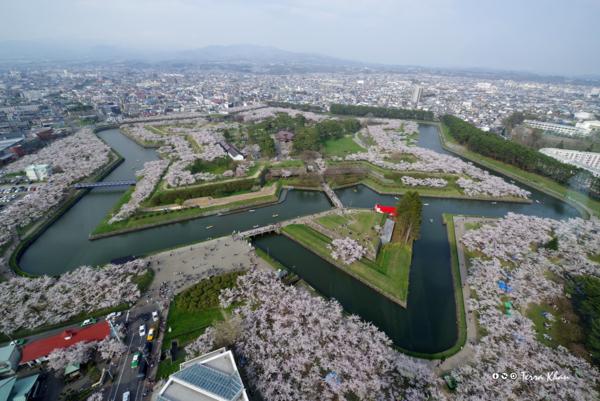 五稜郭 桜満開