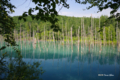 [北海道][美瑛]青い池