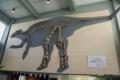 """[北海道][むかわ町立穂別博物館][化石]むかわ町穂別博物館 """"むかわ竜""""発掘骨格レプリカ"""
