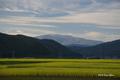 [岩手県][遠野]稲穂の向こうの早池峰山
