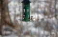 [ウトナイ湖][鳥][冬景色]コガラ @ウトナイ湖ネイチャーセンター