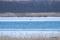 オジロワシの幼鳥とカモ類 @ウトナイ湖