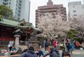 [東京][桜][花] @渋谷金王八幡宮
