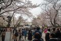 [東京][桜][花]靖国神社