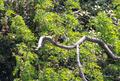 [東京港野鳥公園][鳥]カワセミ @東京港野鳥公園