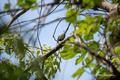 [東京港野鳥公園][鳥]シジュウカラ @東京港野鳥公園