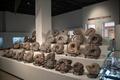 [北海道][化石]アンモナイト化石実物 @三笠市立博物館