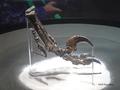[化石][国立科学博物館][恐竜博2019]デイノニクスの鉤爪化石 ホロタイプ @国立科学博物館