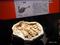 抱卵するシチパチ実物標本 @国立科学博物館