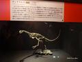 [化石][国立科学博物館][恐竜博2019]チレサウルス復元全身骨格 @国立科学博物館