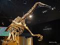 [化石][国立科学博物館][恐竜博2019]デイノケイルス全身骨格(復元) @国立科学博物館