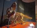 [化石][国立科学博物館][恐竜博2019]タルボサウルス全身骨格復元 @国立科学博物館