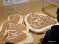 """[化石][国立科学博物館][恐竜博2019]カーン実物標本(通称""""ロミオとジュリエット"""") @国立科学博物館"""