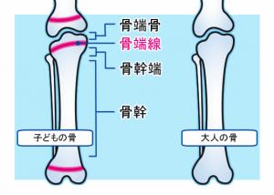 骨端線 身長