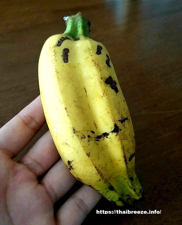 twins_banana