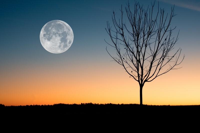 夕焼けと木と満月