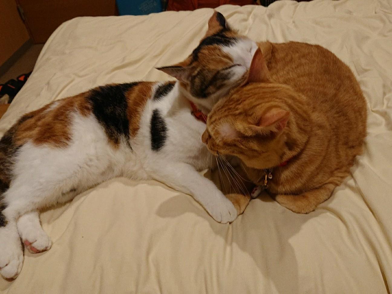 f:id:Three_Traveling_Cats:20190909224500j:image