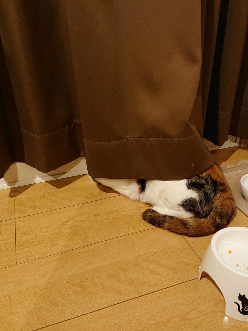 f:id:Three_Traveling_Cats:20190909224619j:image