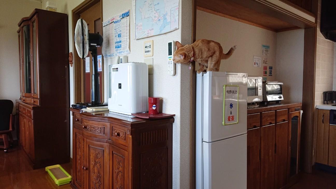 f:id:Three_Traveling_Cats:20210706165239j:image