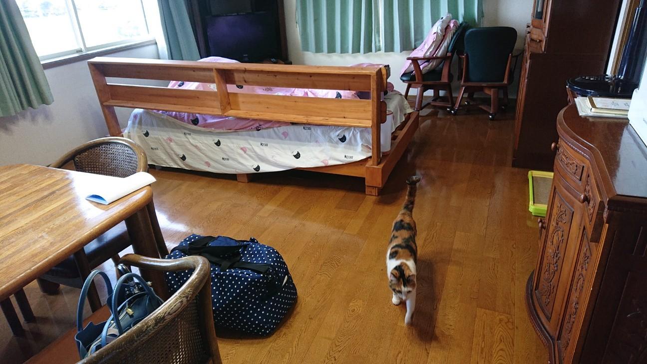 f:id:Three_Traveling_Cats:20210706171633j:image