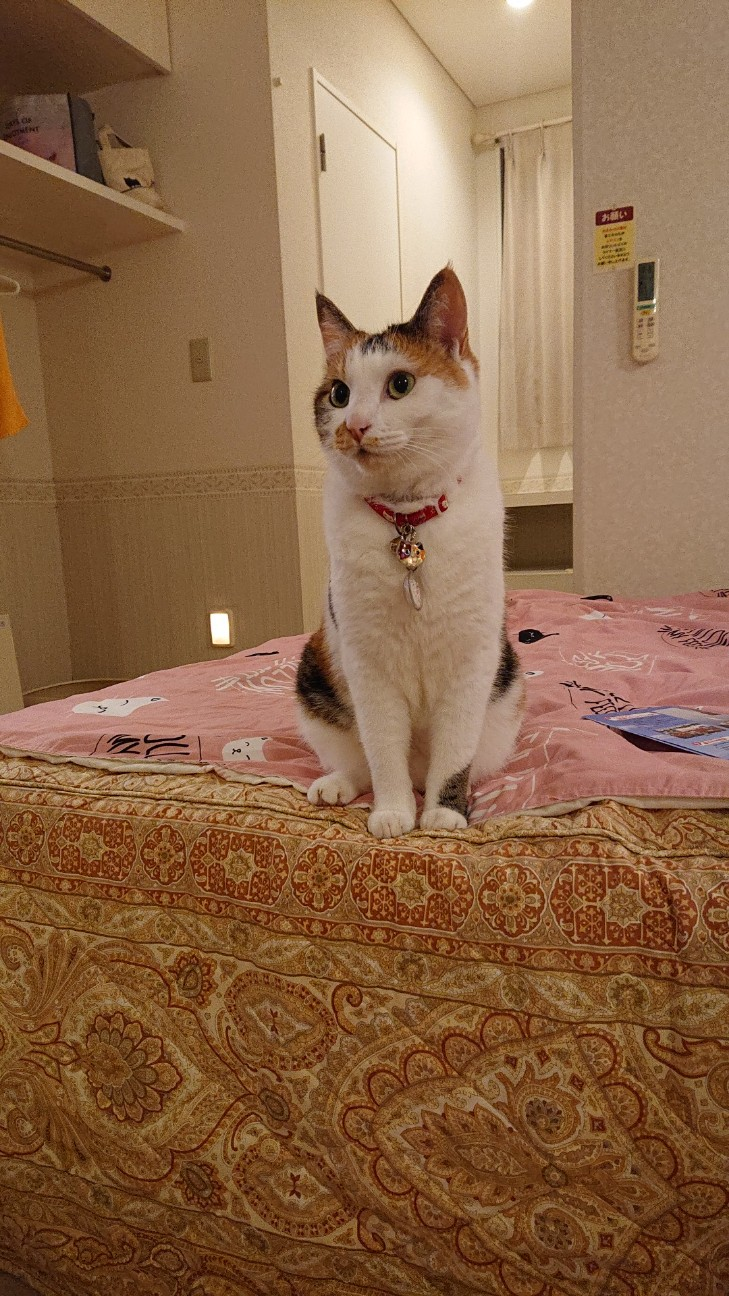 f:id:Three_Traveling_Cats:20210709235616j:image