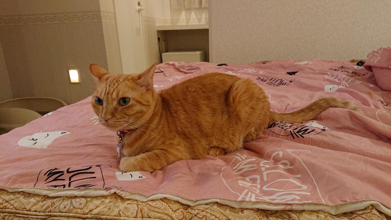 f:id:Three_Traveling_Cats:20210709235626j:image