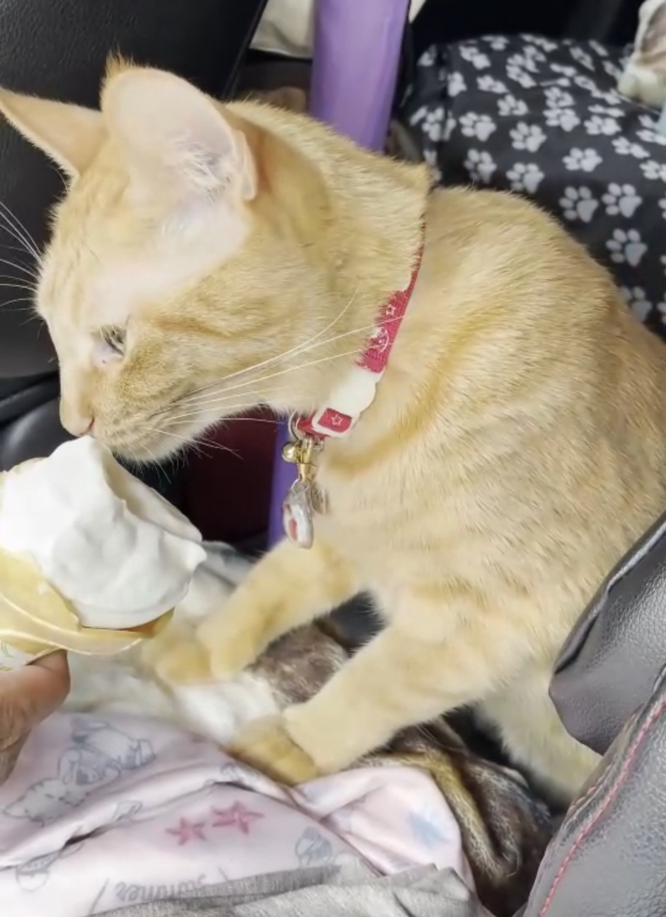 f:id:Three_Traveling_Cats:20210710225708j:image