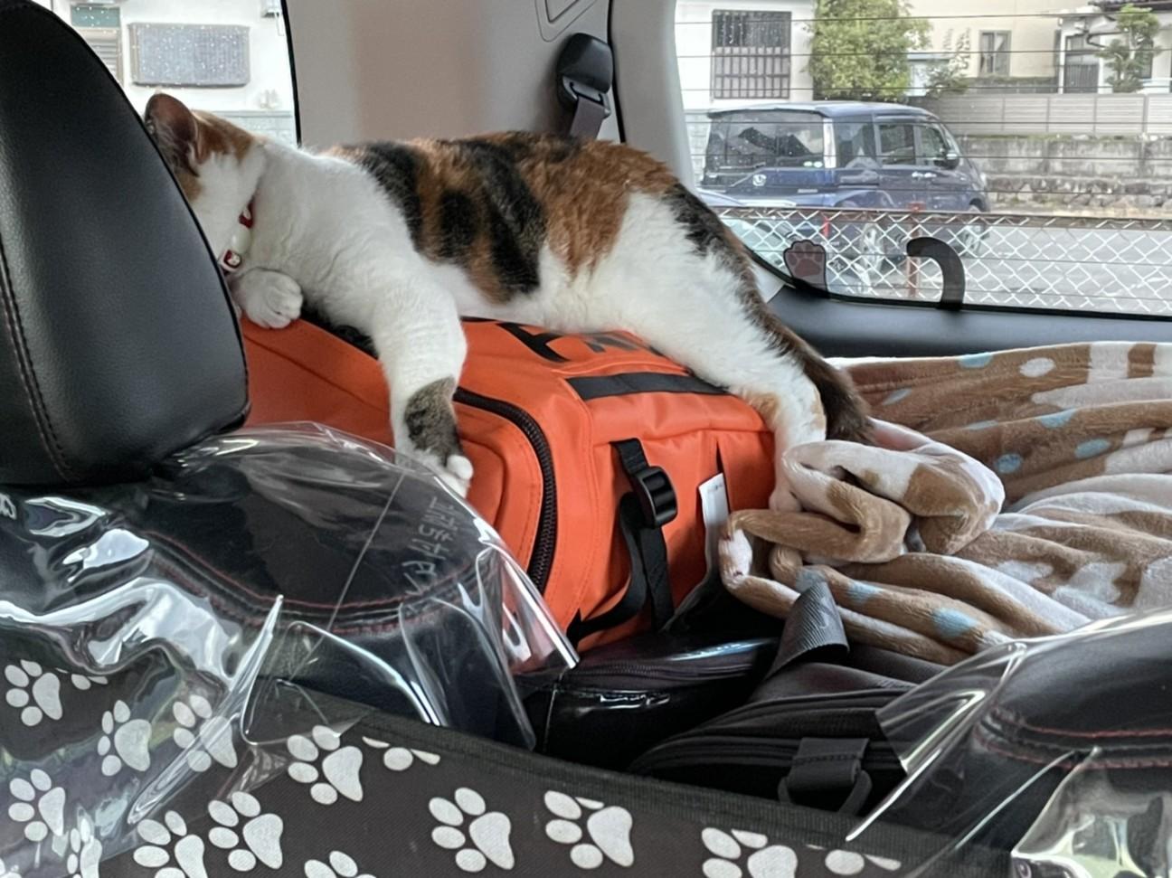 f:id:Three_Traveling_Cats:20210715205810j:image