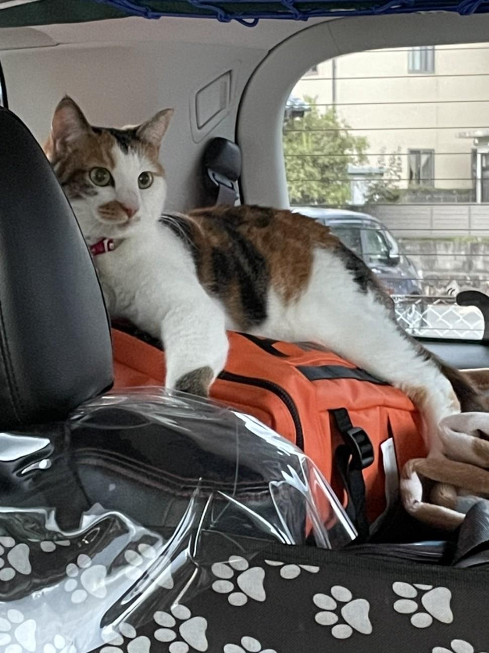 f:id:Three_Traveling_Cats:20210715205853j:image