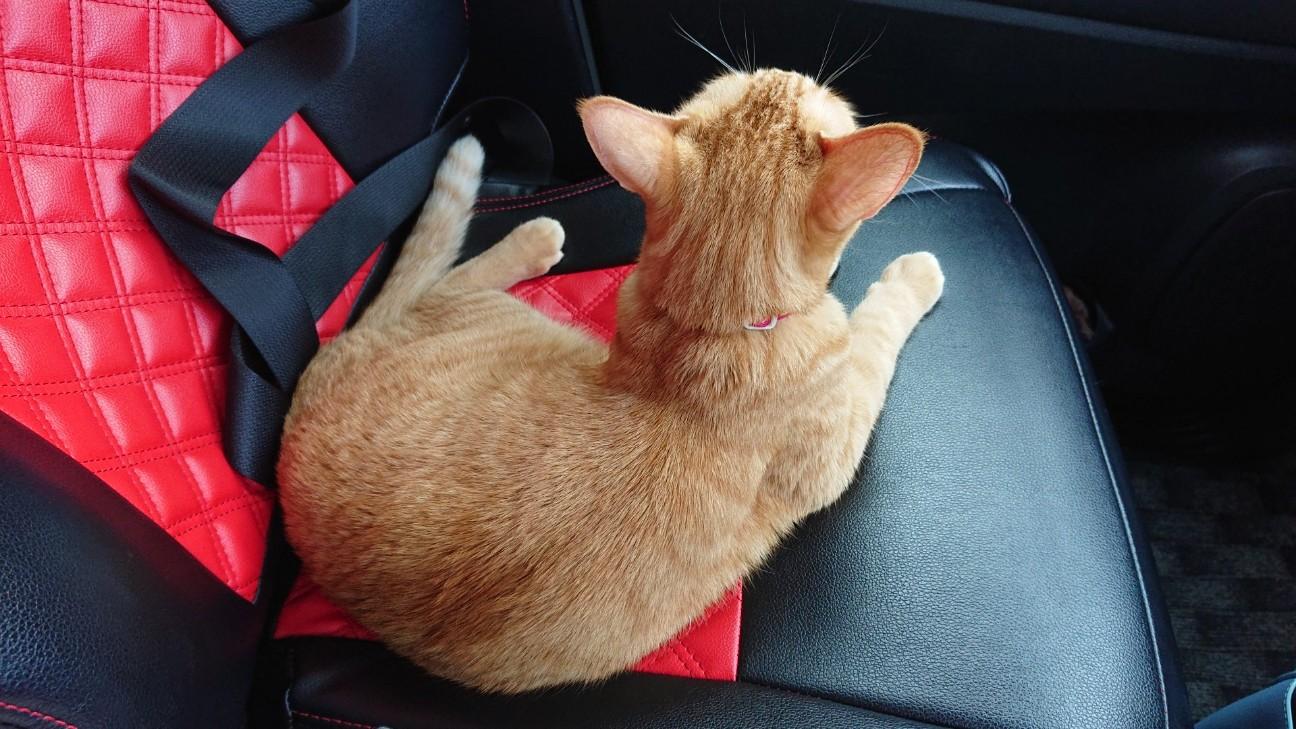 f:id:Three_Traveling_Cats:20210715205907j:image