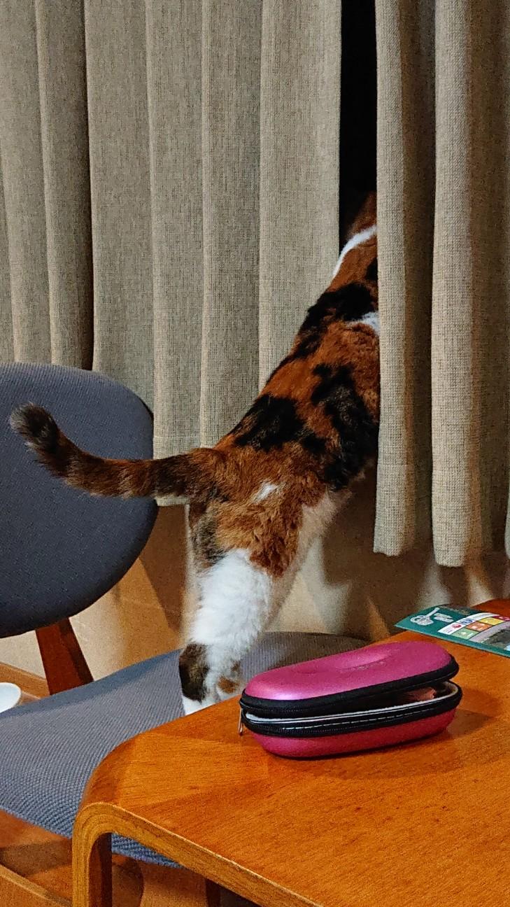 f:id:Three_Traveling_Cats:20210715211545j:image