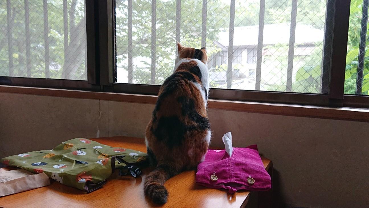f:id:Three_Traveling_Cats:20210716201044j:image
