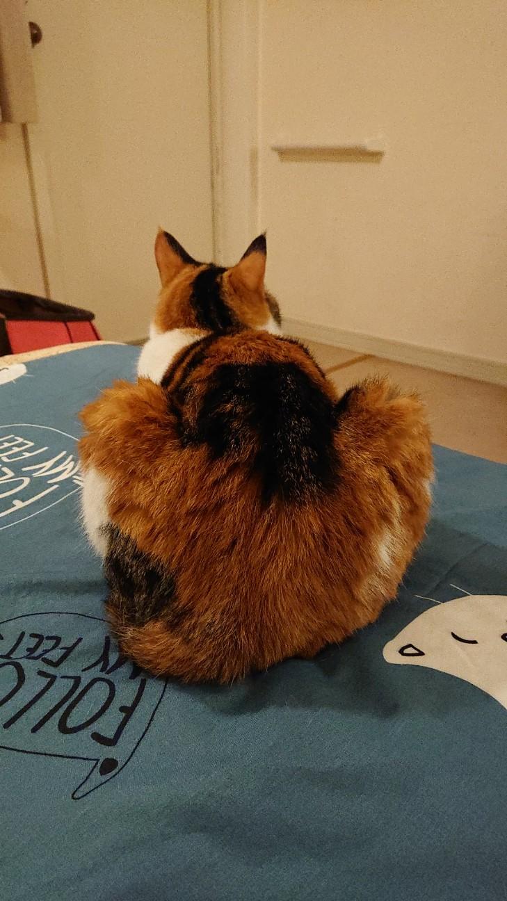 f:id:Three_Traveling_Cats:20210723213437j:image