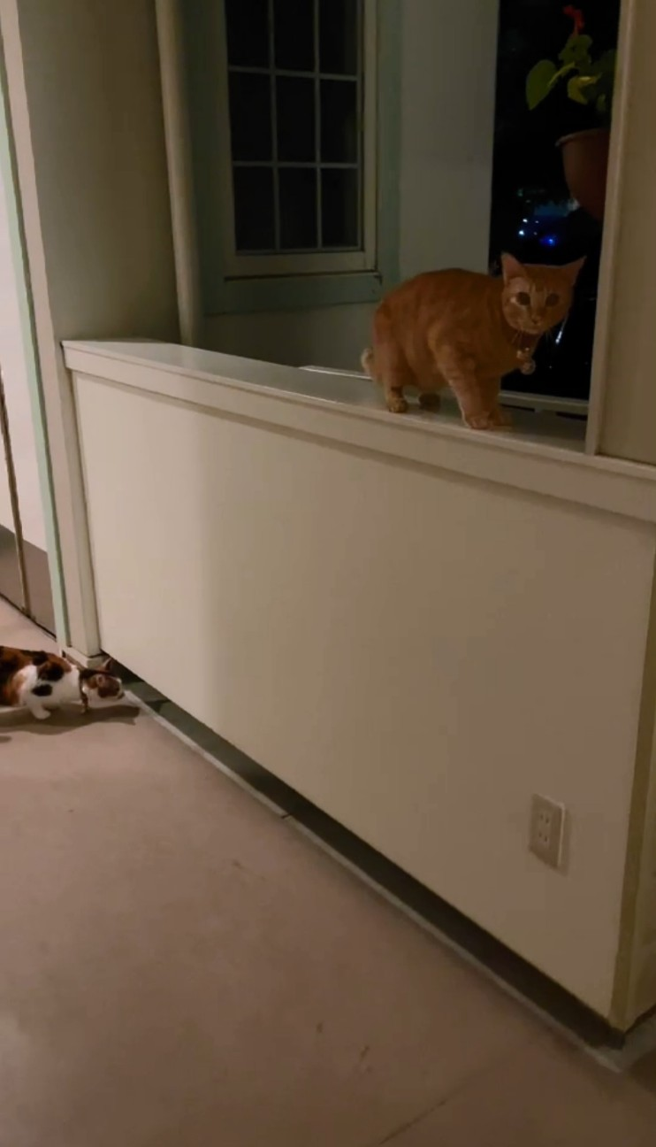 f:id:Three_Traveling_Cats:20210723214808j:image