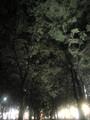 定禅寺通り ケヤキ並木