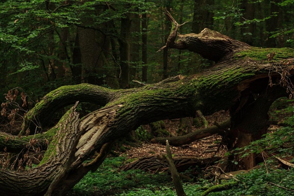 頑強なる木鎧「藤甲」