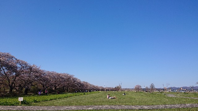 f:id:TohokuKohei:20210411222422j:image
