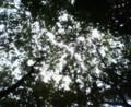キャンプ場の木漏れ日