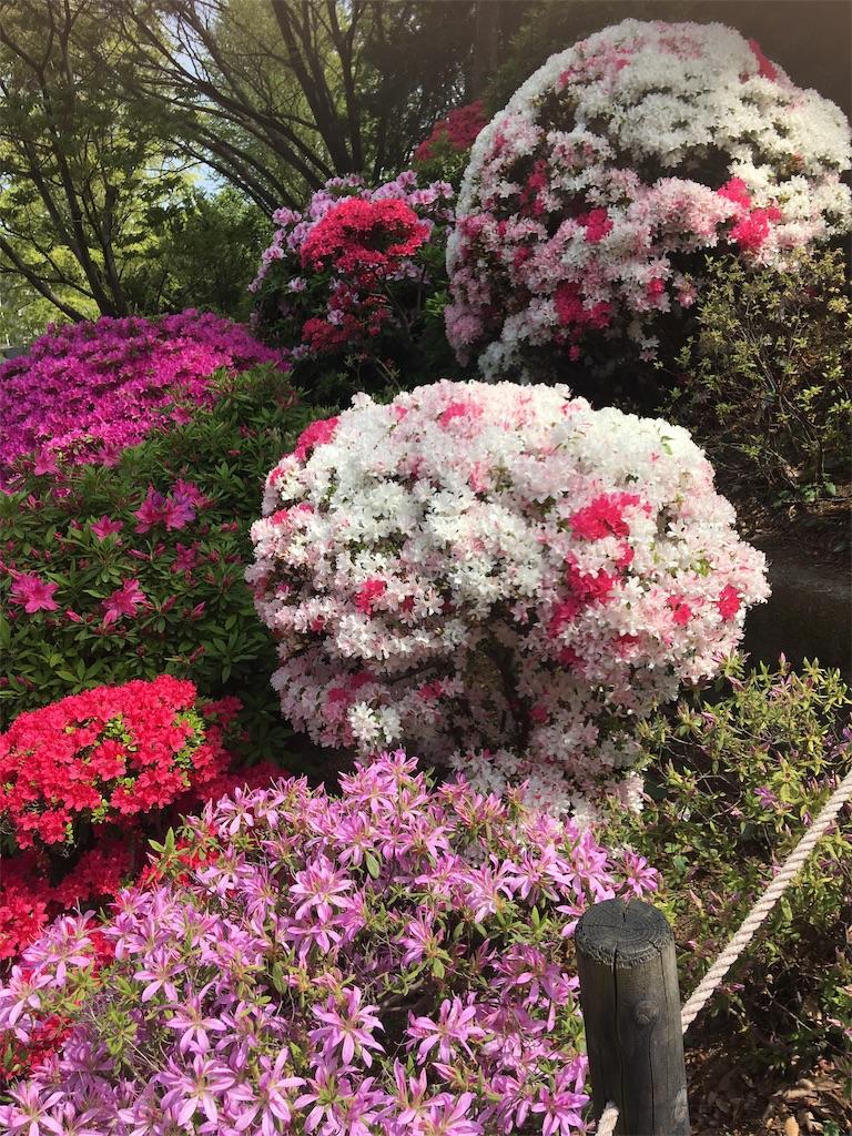 f:id:TokuheiKumagai:20190423185121j:image