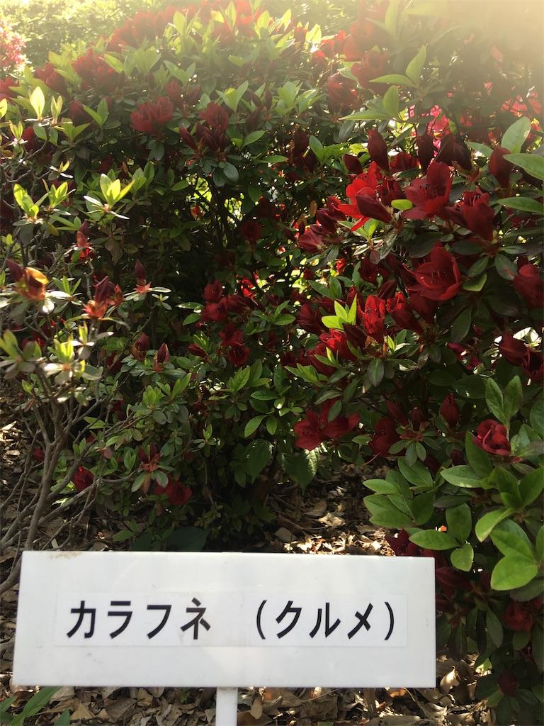 f:id:TokuheiKumagai:20190423185131j:image