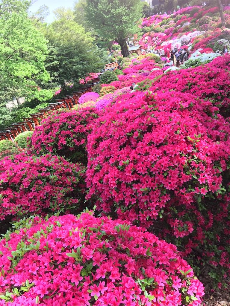 f:id:TokuheiKumagai:20190423185252j:image