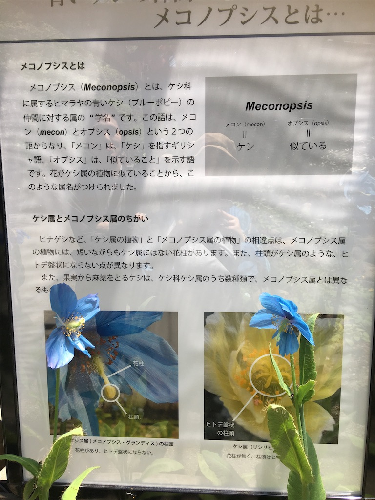 f:id:TokuheiKumagai:20190508204739j:image