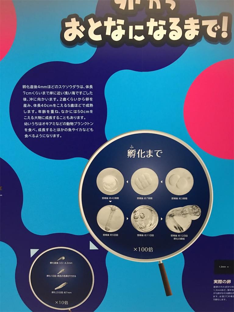 f:id:TokuheiKumagai:20190508204912j:image