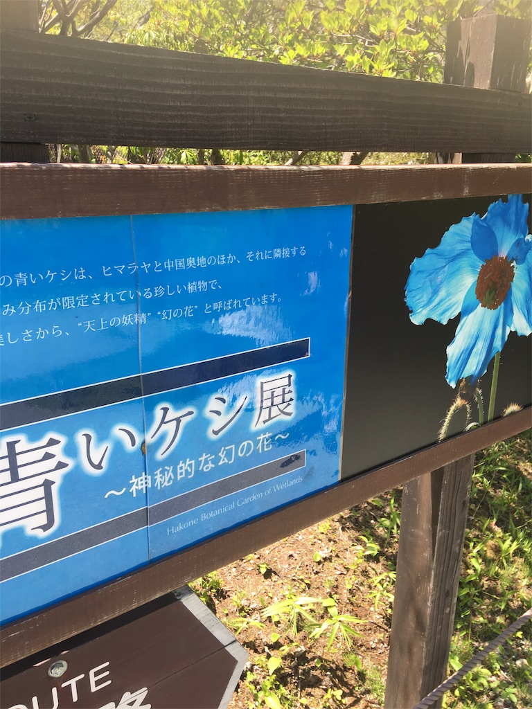 f:id:TokuheiKumagai:20190508205008j:image