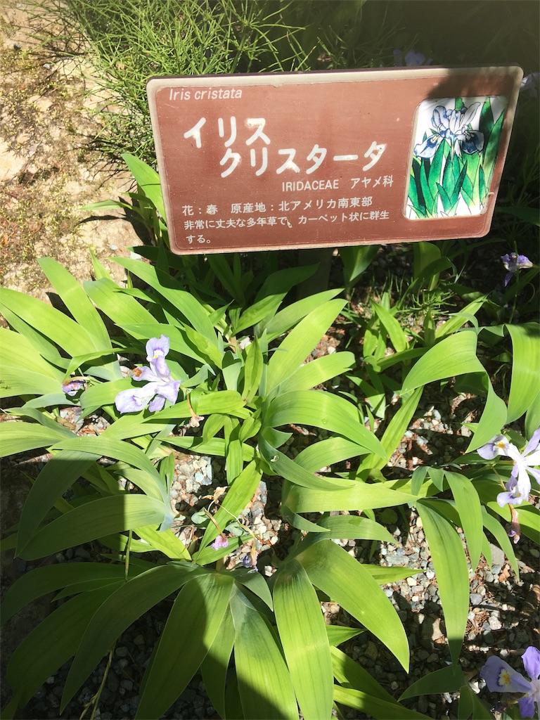 f:id:TokuheiKumagai:20190508205904j:image