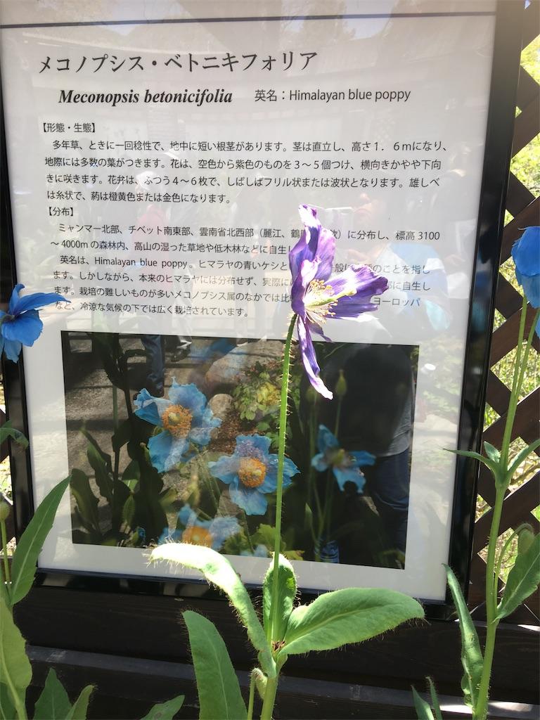 f:id:TokuheiKumagai:20190508205923j:image