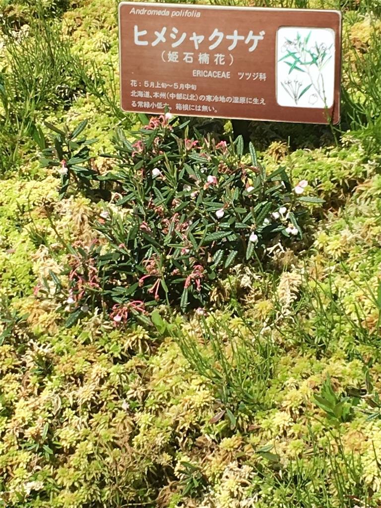 f:id:TokuheiKumagai:20190508210027j:image